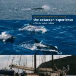 CetaceanExperienceDVD