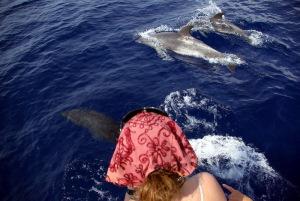 Delfine erleben