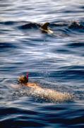 Delfinschwimmen2