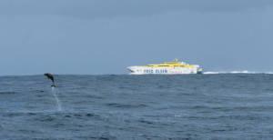 Problemgebiet1 Hochgeschwindigkeitsfaehre_und_Delfin