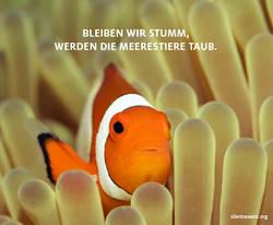 06-silentoceans